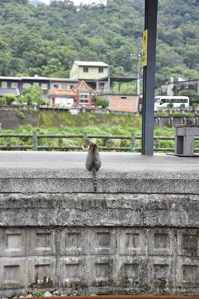 Shifen TAIWAN Cat