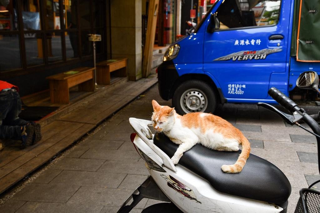 Ximen TAIWAN Cat