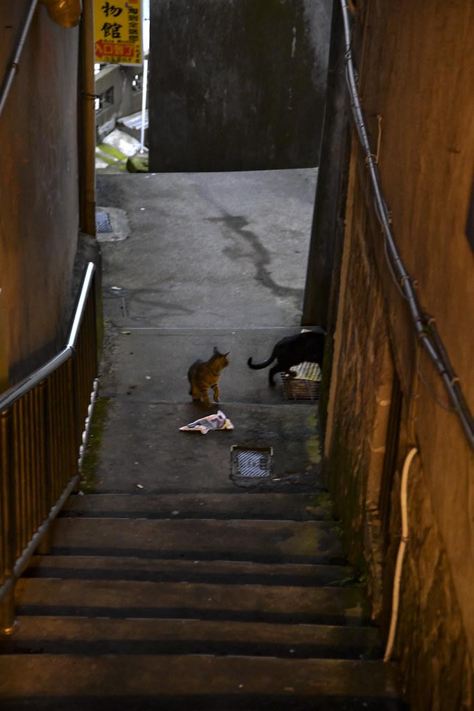 Jiufen TAIWAN Cats