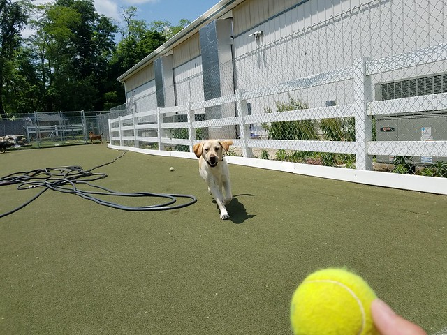 5-31-19 Tennis Ball Fetch! :)