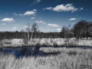 Ewiges Meer bei Westerholt-infrared style-Ostfriesland