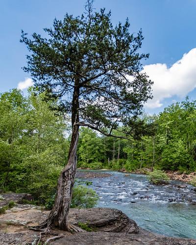 nikon nikond500 water naturalstate wanderfar arkansas creek outside travel ozarknationalforest arkansasoutrdoors ozarks tamron1024mm landscape 2019 d500 tree