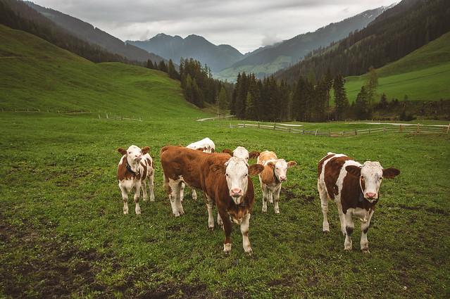 Inneralpbach, Austria