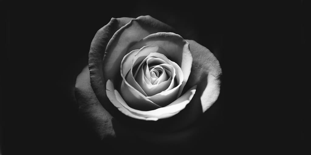 fleur-purificateur-air