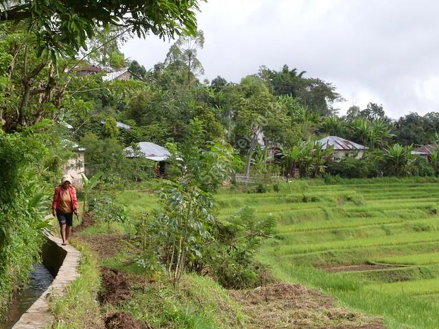 Bangka Kenda Rice Fields