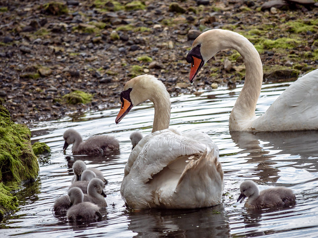 The full family