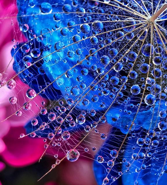 Dandelion Drops