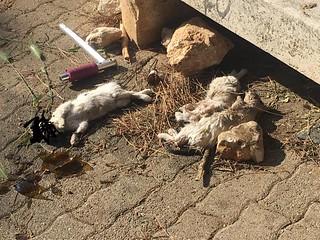 gattini uccisi (1)