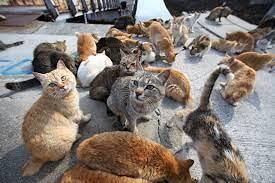 foto colonia felina