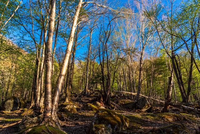 朝日そそぐ樹林