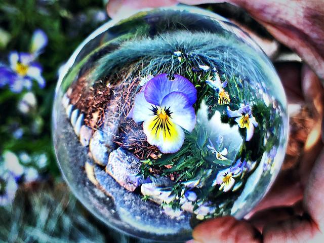 Flower inside the LensBall