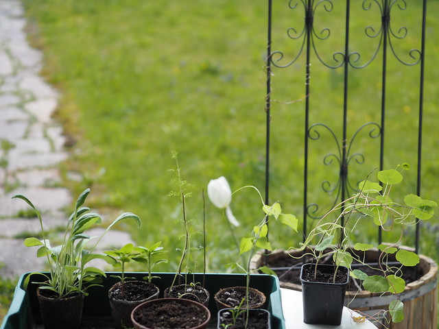 Jungpflanze Garten Frühling © Young Plants Garden Spring ©
