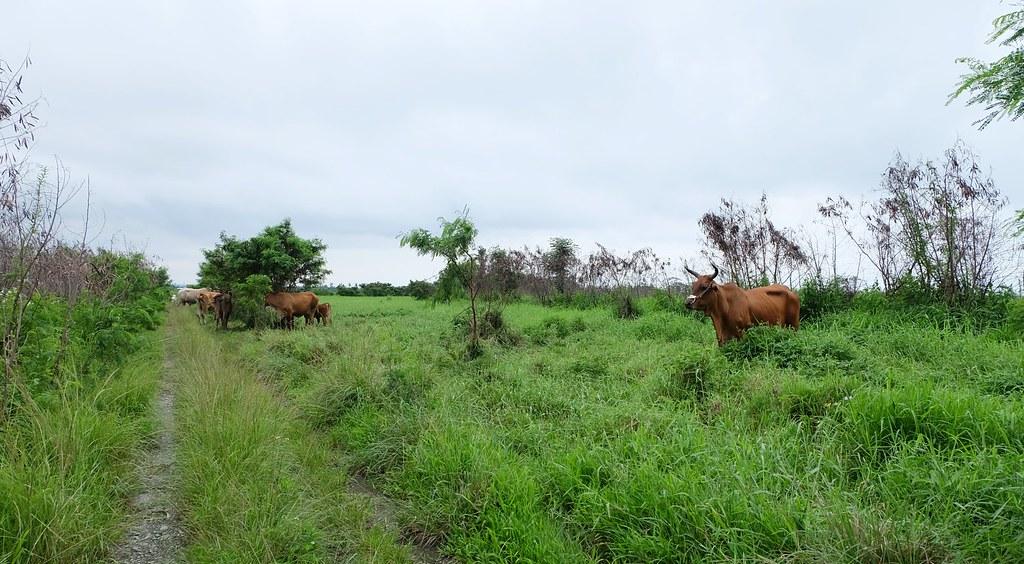 知本濕地的樹叢、草叢,是很多動物繁殖、覓食、躲避攻擊的地點。攝影:陳文姿