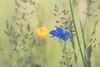 blue by Christian Birzer
