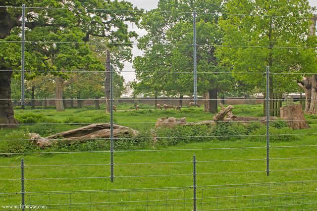 Greenwich Deer Park