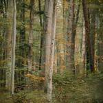 Forest goals