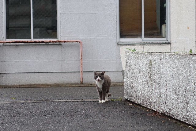 Today's Cat@2019-06-01