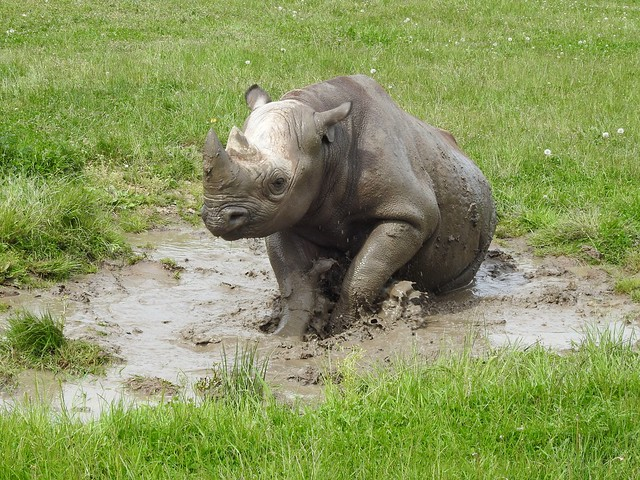 You can't beat a mud bath