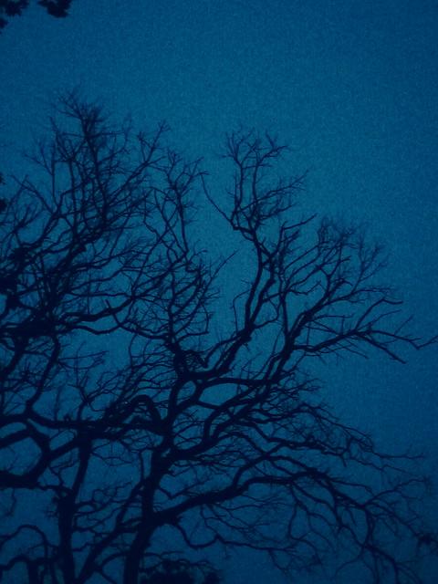 .... Tree