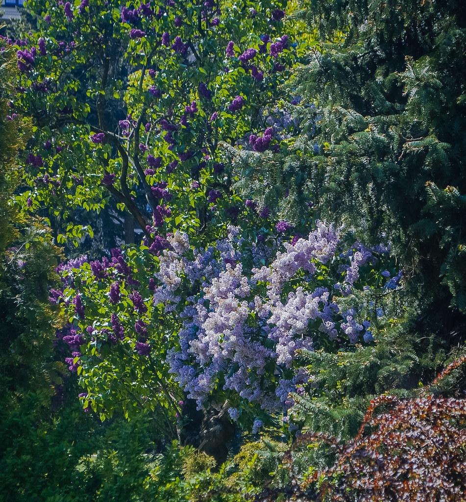 Beautiful blossom Манящие дебри..... 14:43:51 DSC_3186-2