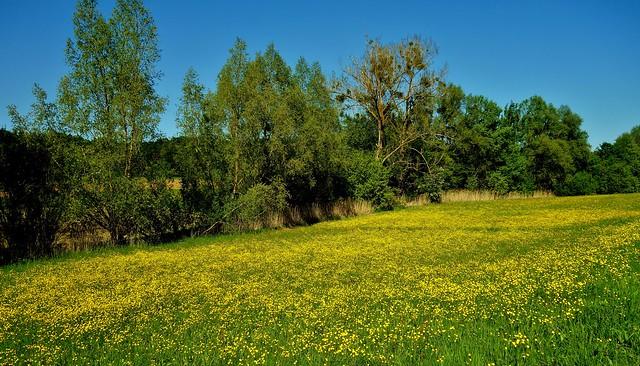 Germany, Leonberg, unterwegs in der Natur, 76675/11546