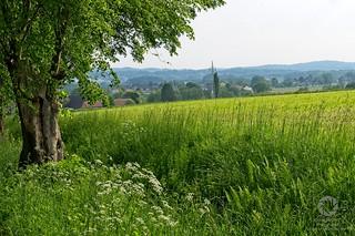 Köckerwald Bielefeld