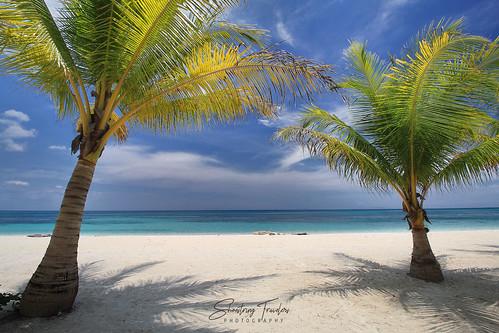 portavega beach tree tropical landscape seascape sea water waterscape cloud sky palms dimasalang masbate bicolregion philippines southeastasia coast outdoor