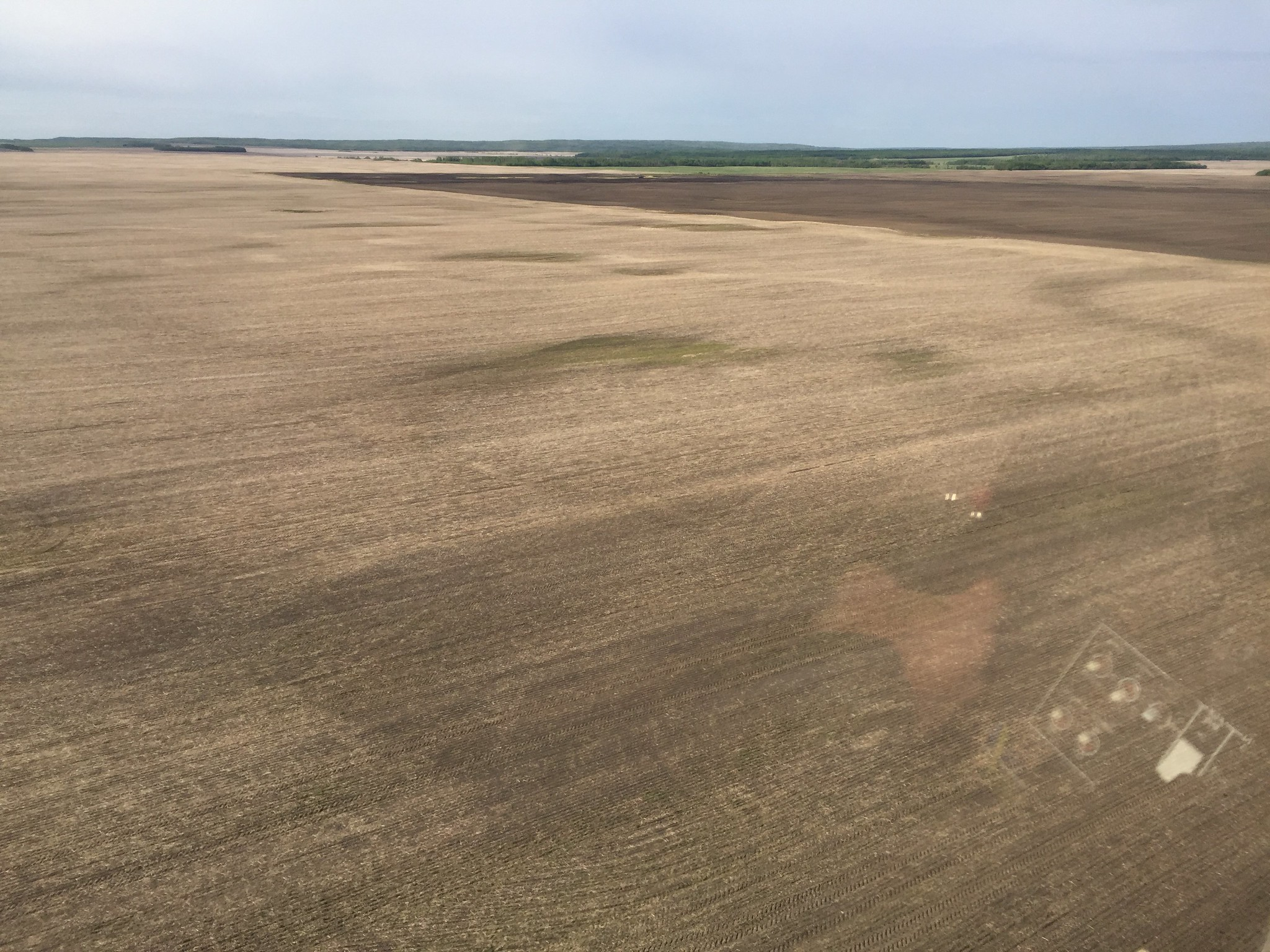 Dry cultivated habitat northeast of Grande Prairie. USFWS