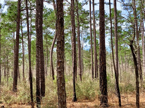 bigthicket texas park hiking