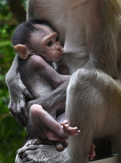 The baby monkey