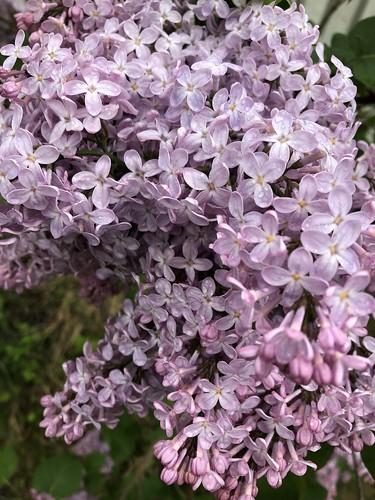 garden, sweden, may 2019 -