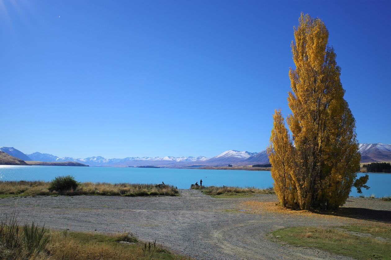 ニュージーランド 紅葉のレイクテカポ