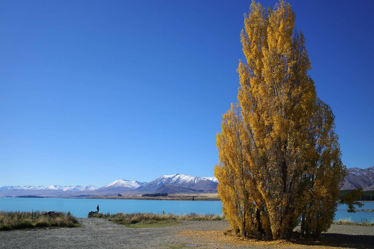 ニュージーランド 紅葉とテカポ湖