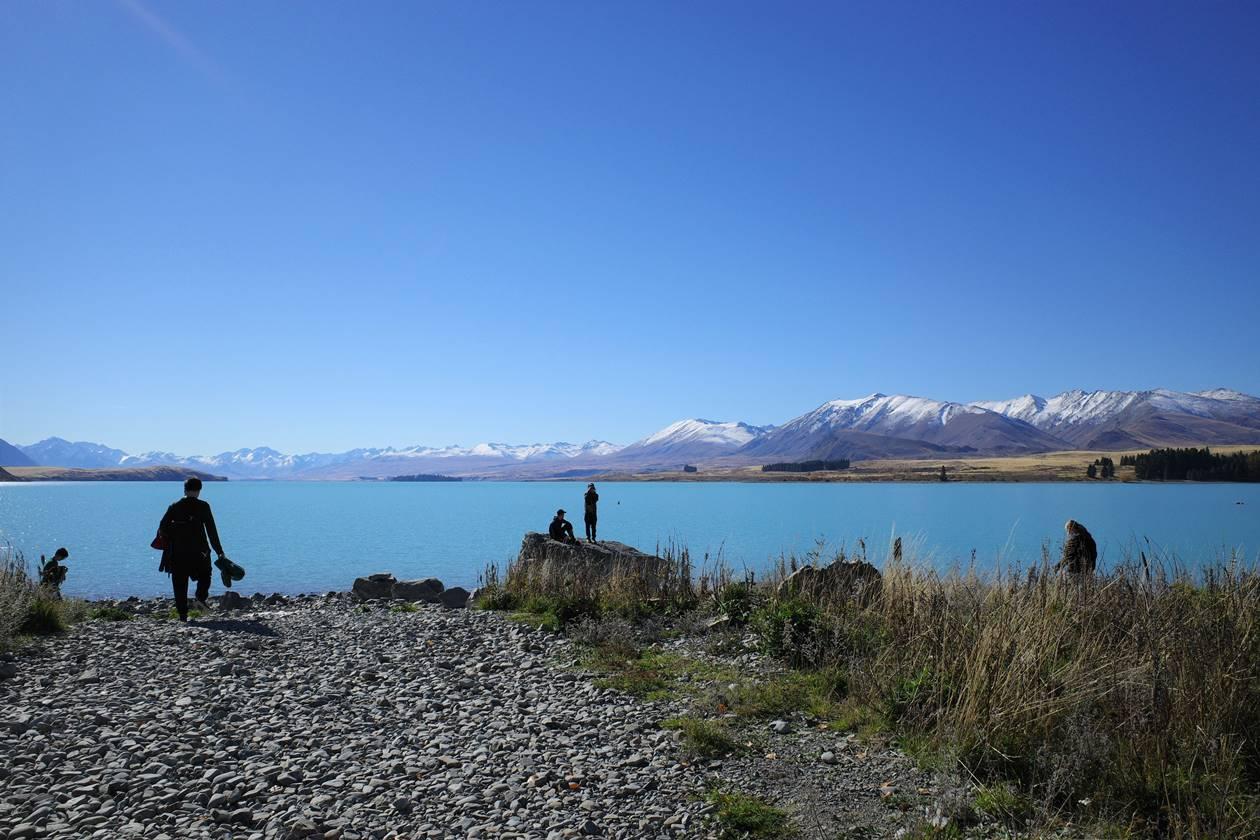ニュージーランド・テカポ湖観光