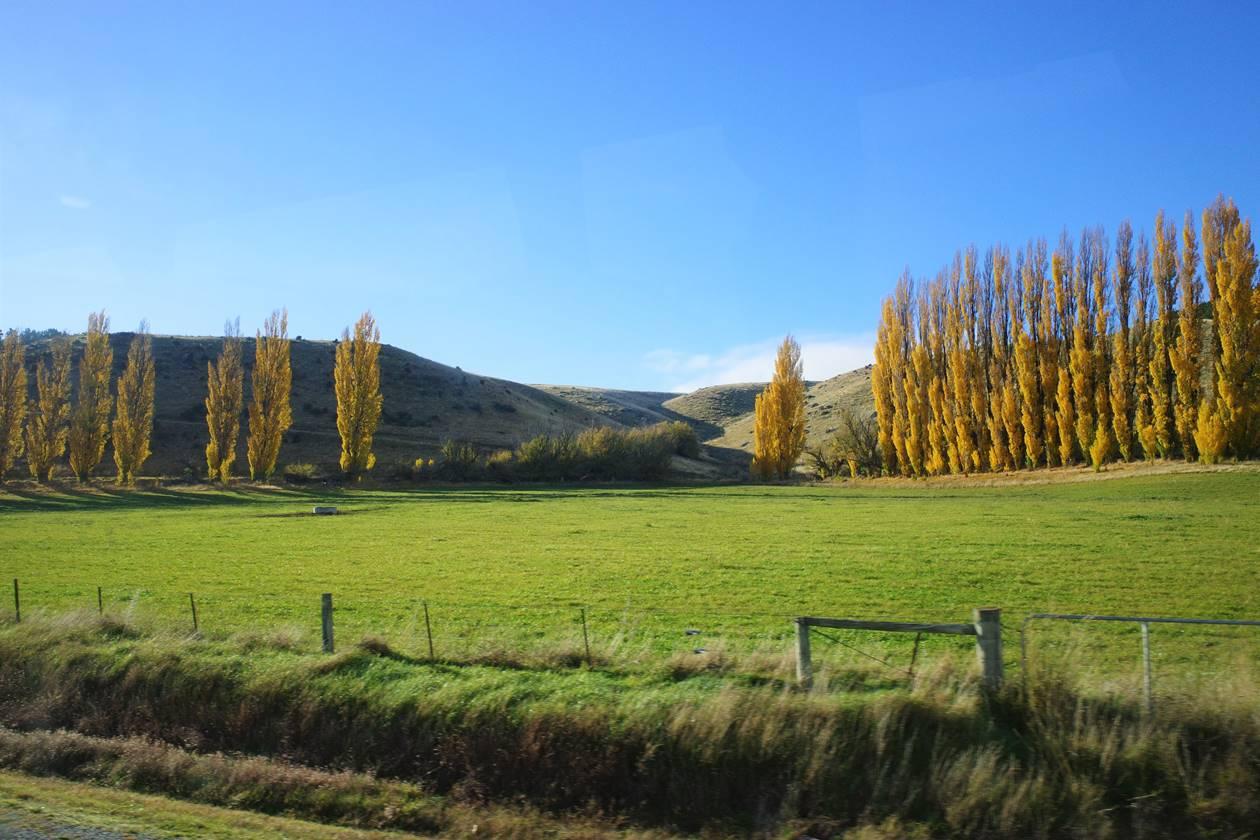 ニュージーランド バス車窓からの紅葉と草原