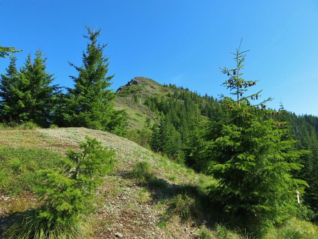 Sardine Mountain