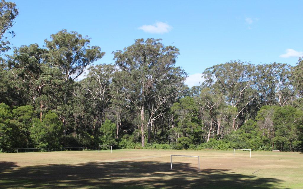 Fiddens Wharf Oval With Blackbutt (Eucalyptus Pilularis) T