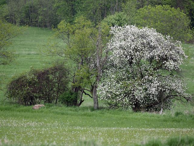 bloomin' June (4)