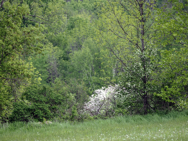 bloomin' June (3)