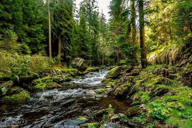 Hera im Schwarzwassertal