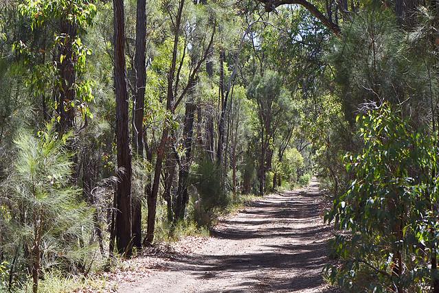 Track in Jarrah forest