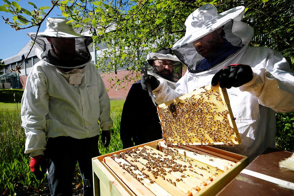 prison-beekeeping-819