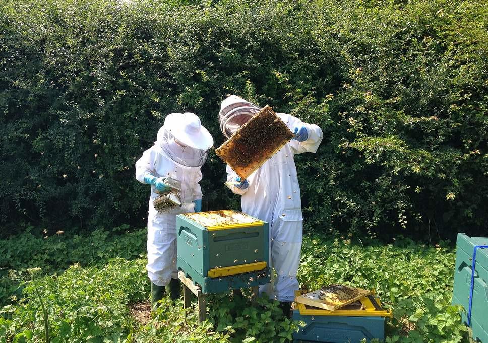 british-beekeepers-1
