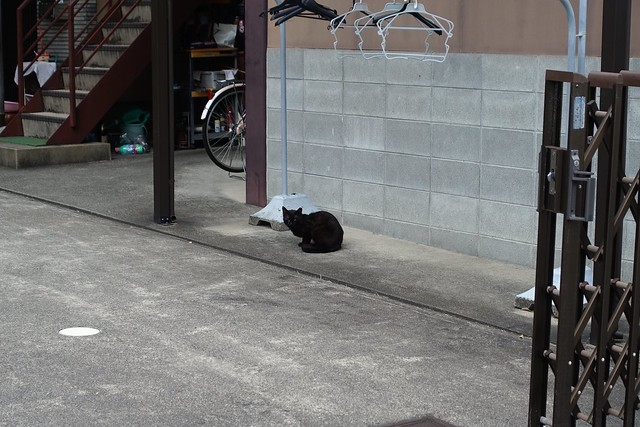 Today's Cat@2019-06-02