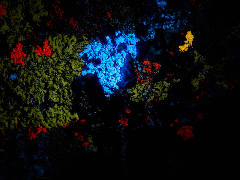 UVA-induced VIS autofluorescence