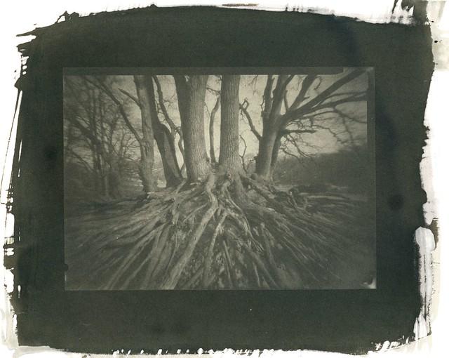 Roots - salt print
