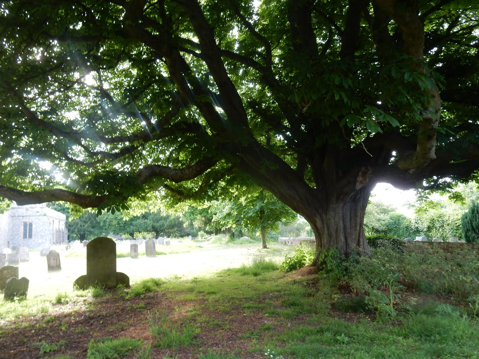 Wye churchyard Sandling to Wye