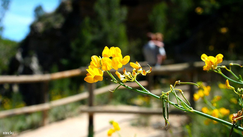 vegetación de la ruta del agua Chelva