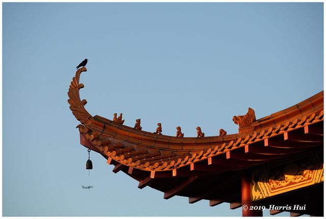 The Bird On Roof Top Of Temple - Lingyen Temple XT7042e
