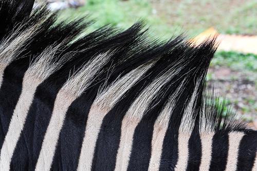 détails lieux animaux thème manzini swaziland